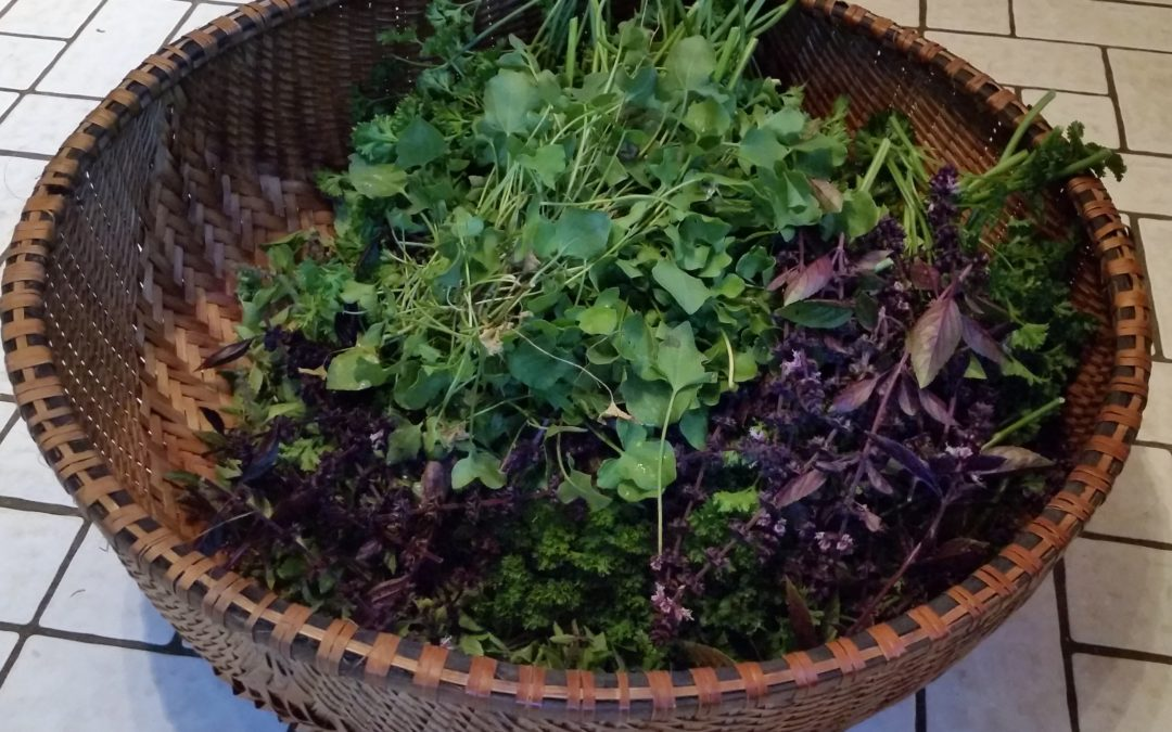 A Recipe for Sustainable Foraging and Harvesting