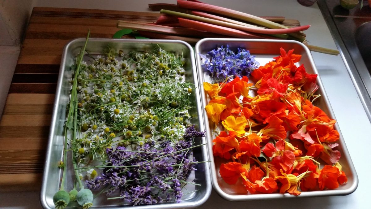 tray of colourful edible & medicinal flowers