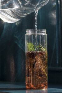 Making herbal sun tea, pouring water in glass full of herbs