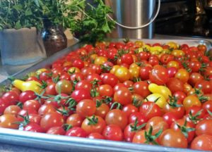 Tray full of colourful cherry tomatoes