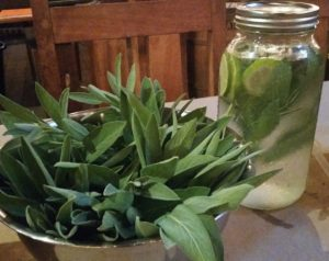 Herbal infusions bowl of fresh herbs & gallon glass jar with herbs & water