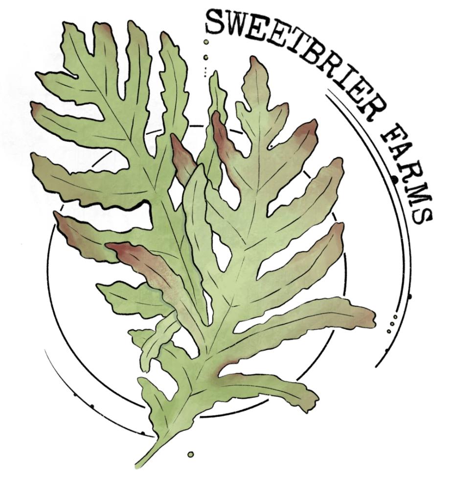 Sweetbrier Farm Logo fern leaf and a full moon sketch