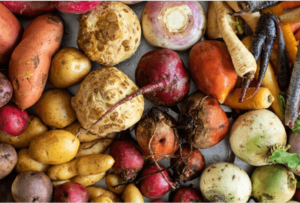 Colourful fresh Root Vegetables on a platter beets, potatoes, celeriac, turnips, carrots, parsnips